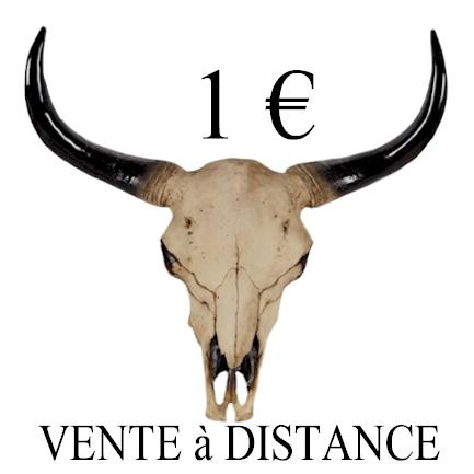 tête de buffle - crane de vache